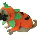 halloween_pet_costume
