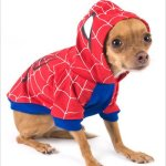 pet_costume_spider_man