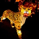 China_Lantern_leopards