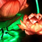 China_Lantern_lotus_flower