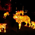 China_Lantern_tigers_leopards